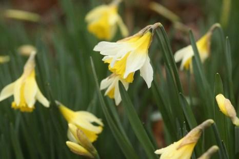 Первый весенний день в Королевских ботанических садах Кью в Лондоне 1 марта 2013 г. Фото: Dan Kitwood/Getty Images