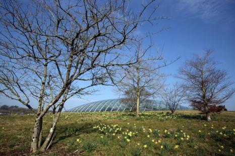 Национальный ботанический сад Уэльса готовится к весеннему сезону. Фото: Matt Cardy/Getty Images