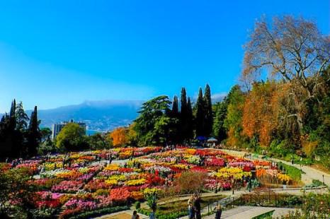 «Бал хризантем» в Никитском ботаническом саду. Вид на Ялту. Фото: Алла Лавриненко/Великая Эпоха (The Epoch Times)