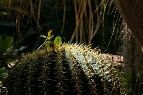 Райский сад в посёлке Эйн-Геди. Фото: Хава Тор/Великая Эпоха (The Epoch Times)