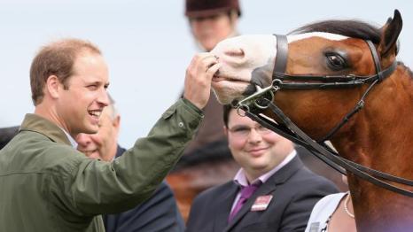 Герцог Кембриджский Уильям впервые после рождения сына совершил 14 августа 2013 года официальный визит, посетив сельскохозяйственную выставку на острове Англси. Герцог поделился впечатлениями о своём отцовстве. Фото: Chris Jackson/Getty Images