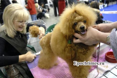 Выставка собак. Фото: Великая Эпоха (The Epoch Times)