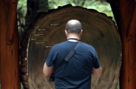 Срез тысячелетней секвойи, на котором отмечены даты главных событий США, в национальном заповеднике «Мьюирский лес» в Калифорнии 20 августа 2013 года. Фото: Justin Sullivan/Getty Images
