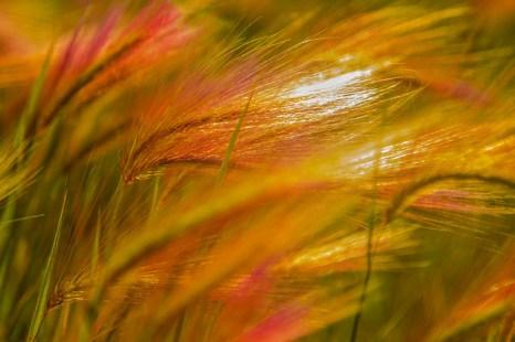 Осень. Фото: Сергей Тугужеков/Великая Эпоха (The Epoch Times)