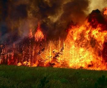 В Нижегородской области горят леса. Фото с t-l.ru