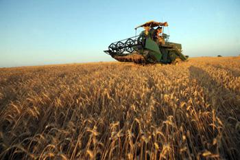 Погода уничтожает урожай зерновых. Фото: FETHI BELAID /AFP /Getty Images