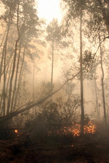 Лесные пожары вновь угрожают  России. Фото: ANDREY SMIRNOV/AFP/Getty Images