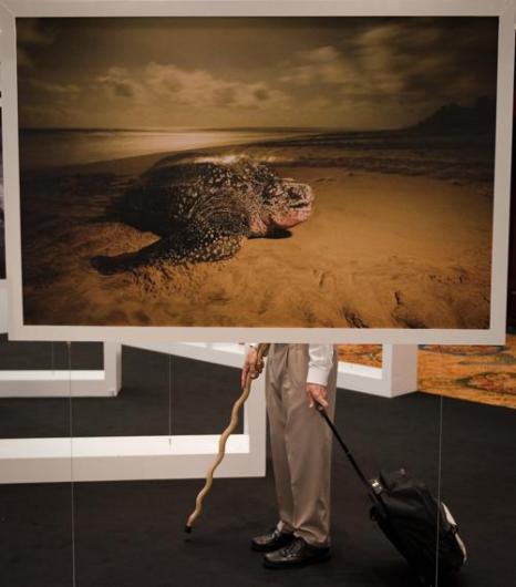 Конференция СИТЕС. Фото: NICOLAS ASFOURI/AFP/Getty Images