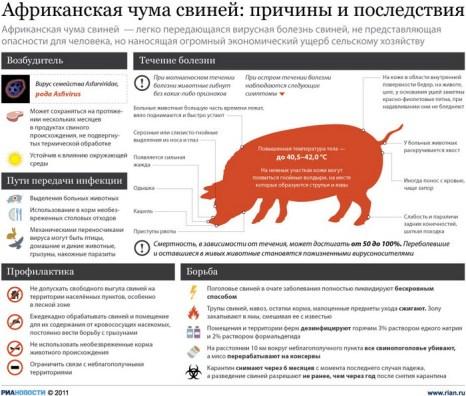 Африканская чума свиней: причины и последствия