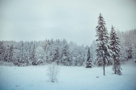 Спасатели нашли в тайге учёных, застрявших в снегу при 50-градусном морозе. Фото:  Olga Kruglova/flickr.com