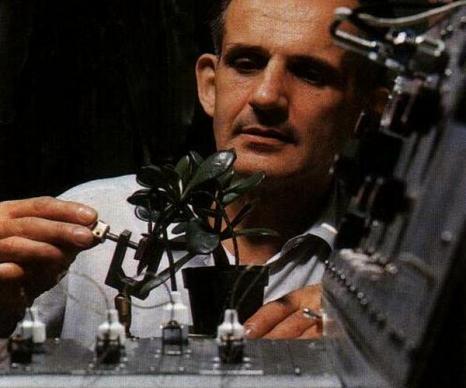 Эффект Бакстера: У растений есть эмоции. Клив Бакстер подсоединяет к аппарату комнатный цветок, чтобы записать его реакцию в ответ на разные формы, воздействия. Фото сайта anamalia.ru