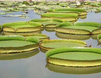 Поверхность воды: в каждом хорошем садике, по Фэн Шуй должна быть вода, лучше всего пруд полукруглой формы. Он служит балансировке Инь и Ян. Фото с сайтаepochtimes.de