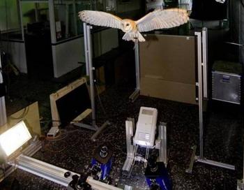 Наблюдение за полетом совы-сипухи восемью высокоскоростными камерами высокого разрешения. Фото с сайта epochtimes.de