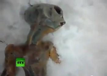 Мертвый инопланетянин, найденный в Сибири - фальсификация
