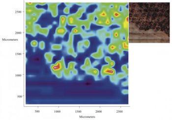 Инфракрасный снимок белков в коже рептилии, которой 50 миллионов лет. Новая инфракрасная технология отображения позволяет увидеть, что за 50 миллионов лет сохранился органический материал в мягких тканях рептилии. Фото с сайта theepochtimes.com