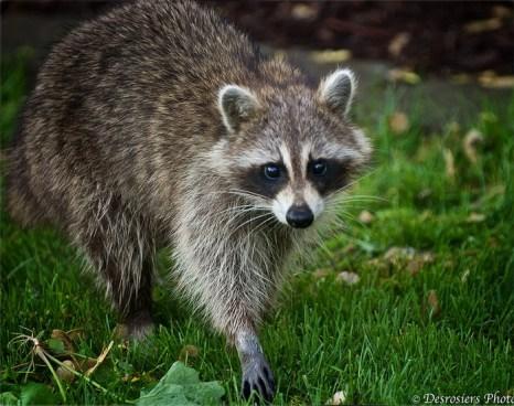 Разрушают ли экзотические животные нашу экосистему? Фото  с сайта