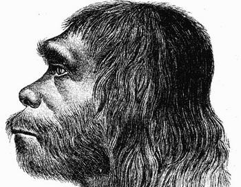 Неандертальцы умели организовать своё жилое пространство. Фото: Hermann Schaaffhausen/commons.wikimedia.org