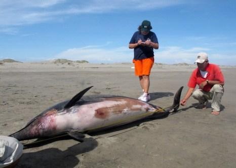 Массовая гибель дельфинов наблюдается в США. Фото: WILFREDO SANDOVAL/AFP/Getty Images