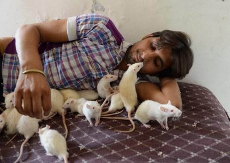 Индийский владелец магазина играет со своим любимцем — крысой Ахмедабадом. Фото: Sam Panthaky/AFP/Getty Images