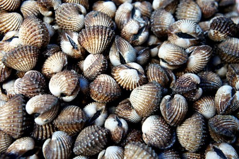 Моллюски. Создано сверхпрочное стекло по аналогии со структурой моллюсков и раковин. Фото: morguefile.com