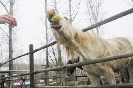 Местные жители приезжают в питомник покормить животных. Фото: Мария ЗАГВАЗДИНА/Великая Эпоха (The Epoch Times