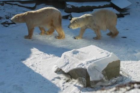 Арктические морозы добрались до Германии. Фоторепортаж. Фото: Sean Gallup/Getty Images