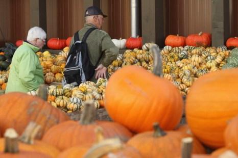 Осень – сезон тыкв. Фоторепортаж из Германии. Фото: Sean Gallup/Getty Images