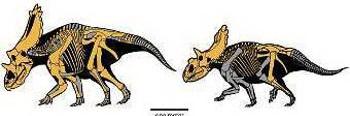 Ученые считали, что динозавры вымерли 65 млн лет назад от удара метеорита. Эта версия подверглась сомнению. Отчего вымерли динозавры - остается загадкой. Фото с сайта dinozavr.org