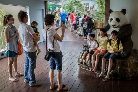 Заповедник в Сингапуре готовится к открытию речного сафари 25 марта 2013 г. Фото: Chris McGrath/Getty Images