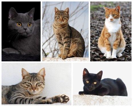 В настоящее время в мире насчитывается около 600 млн домашних кошек, выведено около 256 пород. Фото: Alvesgaspar/commons.wikimedia.org