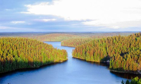 Белые ночи в национальном парке Реповеси. Фото: M. Passinen/commons.wikimedia.org