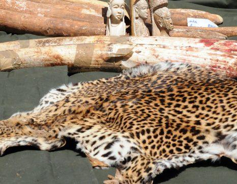 Шкура животных и изделия из слоновой кости. Фото: SIMON MAINA/AFP/Getty Images