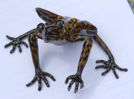 Редкий вид лягушек Hyloscirtus princecharlesi в Эквадоре был назван в честь принца Чарльза, наследника британского престола,  за его заслуги в деле защиты тропических лесов. Фоторепортаж. Фото: Arthur Edwards - WPA Pool/Getty Images