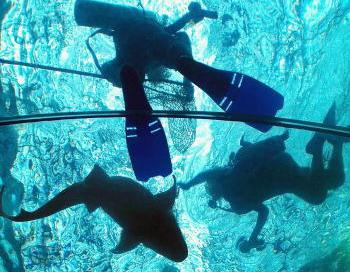 Акула в  Шарм-эль-Шейхе поймана. Фото: Sam Greenwood/Getty Images