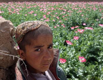 Афганец на поле опийного мака. Фото: LOUISA GOULIAMAKI/AFP/Getty Images