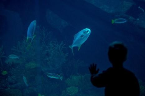 В океанариуме Сингапура Manta Ray Marine Park Life Resort World Sentosa, 18 января 2013 года. Фото: Chris McGrath / Getty Images