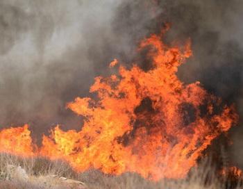 Крупный лесной пожар бушует в штате Айдахо в США. Фото: FREDERIC J. BROWN/AFP/Getty Images