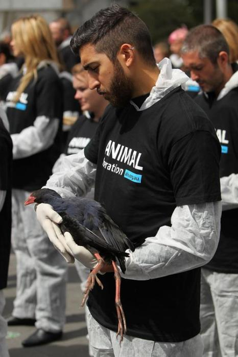 В австралийском Мельбурне более 200 активистов выступили в защиту животных и за вегетарианство, проведя акцию «Виктория» (освобождение) с мёртвыми животными на площади Федерации 30 сентября 2013 года. Фото: Graham Denholm/Getty Images