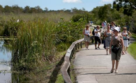 Национальный парк «Эверглейдс» в Майями вновь принимает посетителей. Он открылся 17 октября 2013 года, вслед за принятием нового законопроекта США о возобновлении работы правительства США. Парк не работал 16 дней. Фото: Joe Raedle / Getty Images