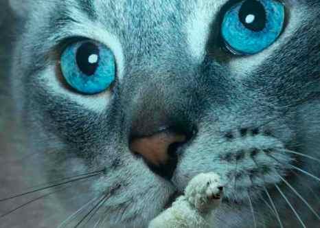 Кому доверить питомца? Кому оставить кошку или собаку соседям, родственникам или друзьям. Фото: BEN STANSALL/AFP/Getty Images