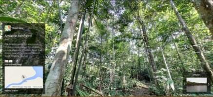 Rain-Forest-e1385491608247