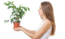 растения, мышление растений