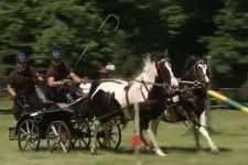 беговая лошадь, повозка, Пщина
