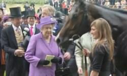 В крови скакуна британской королевы обнаружен допинг