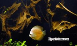 наука, память, рыбы