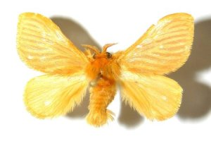 rsz_moth