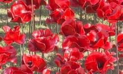 У стен Тауэра появились сотни тысяч керамических маков в память о жертвах войны 1914-1918