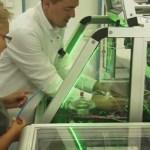 Немецкие учёные вырастили миниатюрное лёгкое