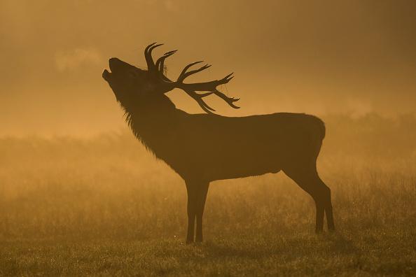 Лондон, Ричмонд-парк, олень, животные, туман, фото дня, фото