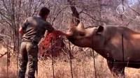 В Индии запустили программу защиты носорогов
